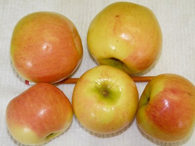 Prairie Sensation Apples